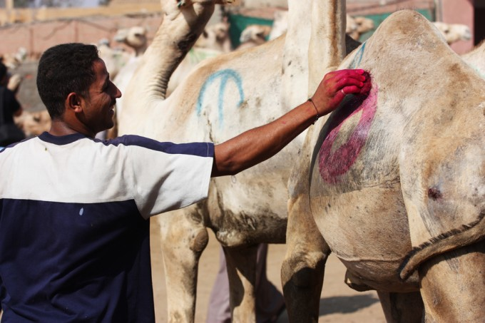 Marking a camel as sold.