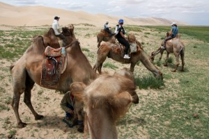 Riding on camels to the Singing Sand Dunes