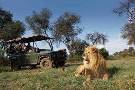 B1 Truck Lion