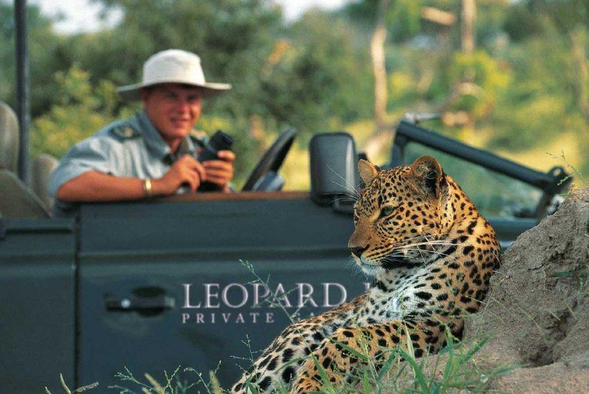 lhills_leopard_2
