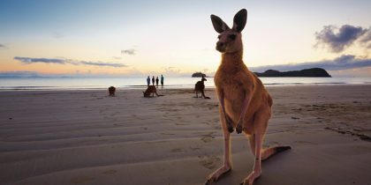 109090-634-ctourism-and-events-queensland