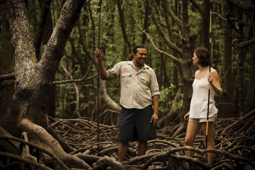 Mangrove walk on Daintree Dreaming Top 10 Things To Do In Cairns