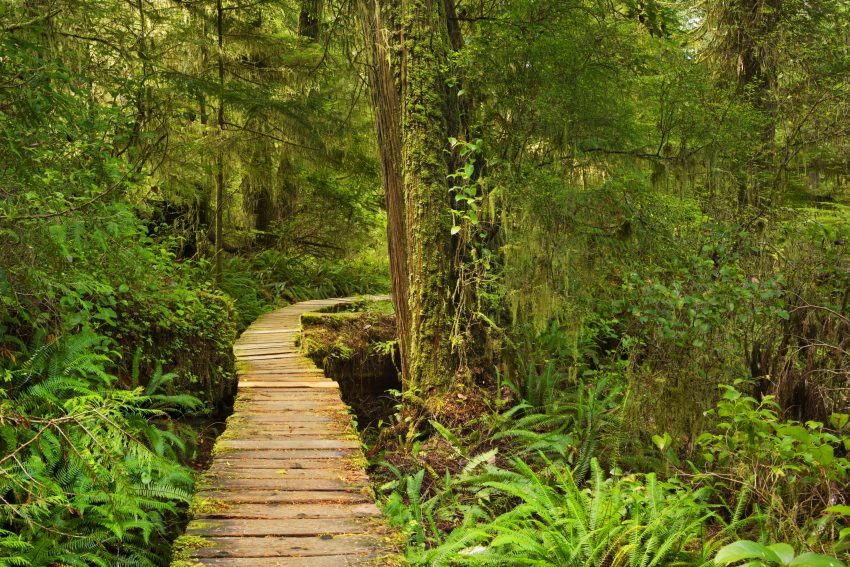 Boardwalk through rainforest, Pacific Rim NP, Canada