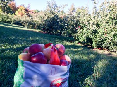 Concord apple picking Festive Fall Days: A Tour of Festivities, History, and Seasonal Fun in Massachusetts