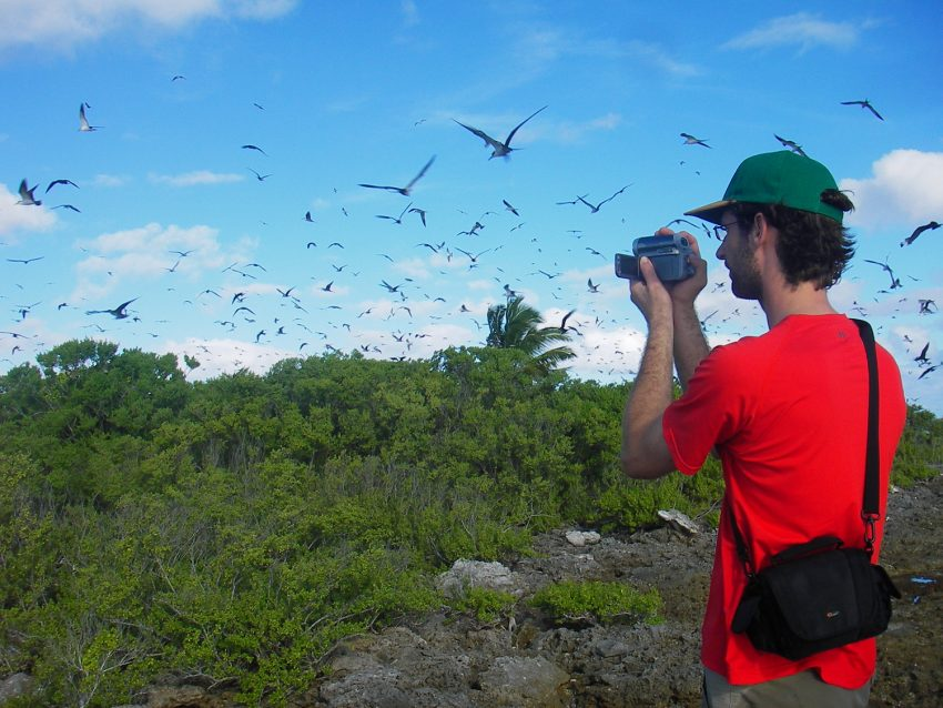 Suwarrow birds Love a Little Extra Paradise: The Outer Islands of the Cook Islands