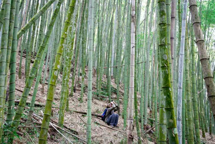 9. bamboo hike 25 Incredible Things To Do in Taiwan