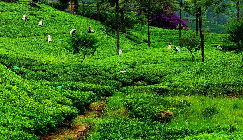 AdobeStock 72889615 Planning Your Dream Trip to Sri Lanka