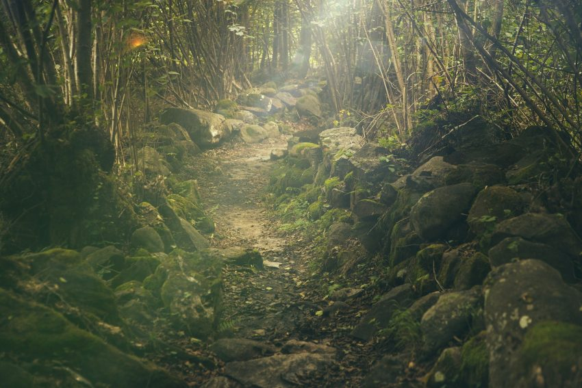 forest 438432 1920 Top Tips for Going on a Hiking Trip