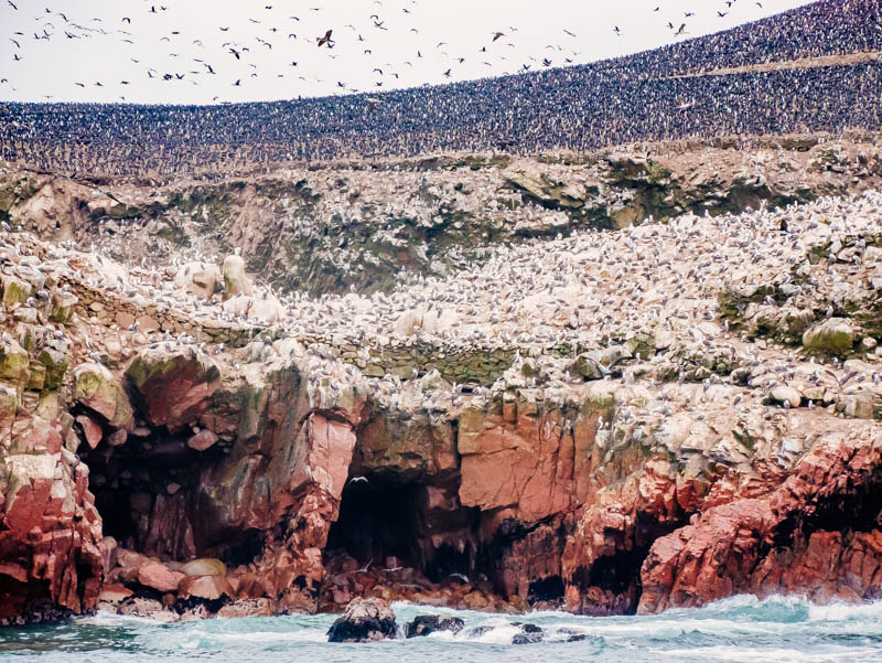 thousand birds Take the Long Road from Lima to Cusco - It's Worth It