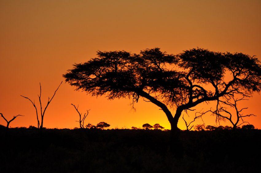 Botswana Savuti Top Safari Tips for your Travels in Africa