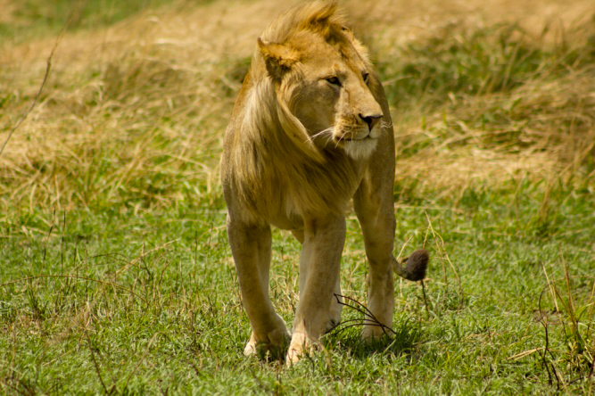 East Africa Serengti Top Safari Tips for your Travels in Africa