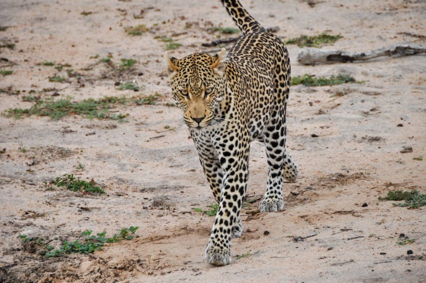 Kruger Top Safari Tips for your Travels in Africa