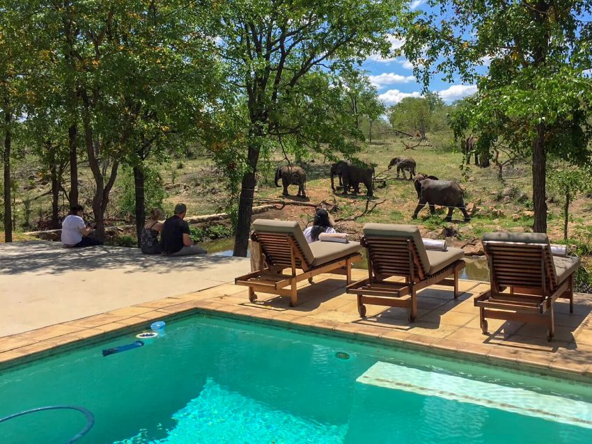 Kruger2 Top Safari Tips for your Travels in Africa