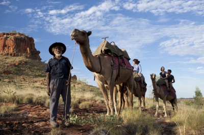 Camels in the Outback of Australia