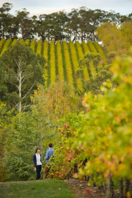 K1 Winery, Adelaide Hills