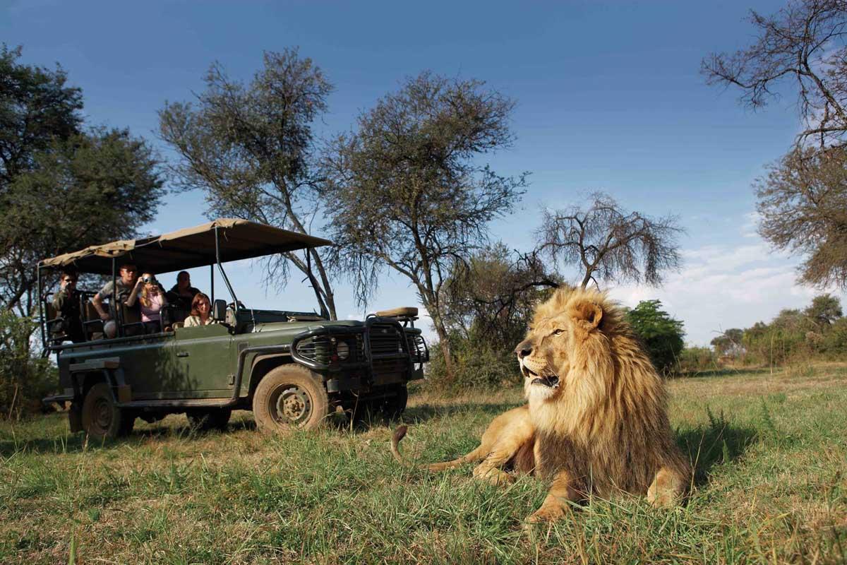B1 Truck Lion Choosing a South African Safari