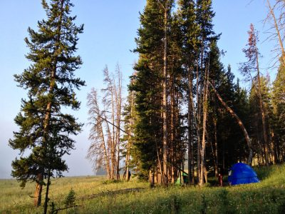 Backwoods of Yellowstone National Park