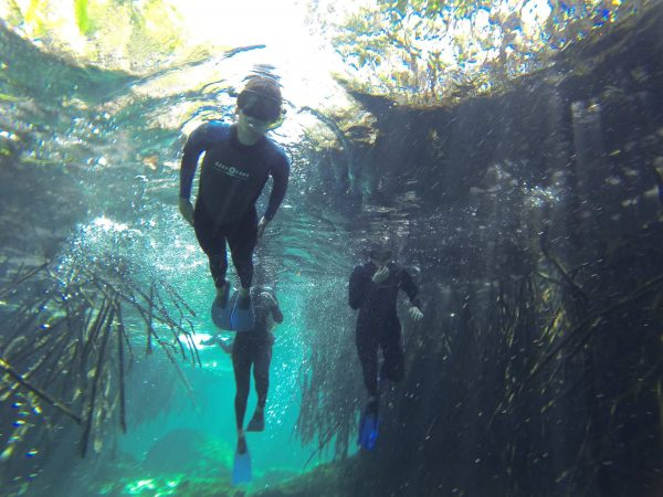 Cenotes – Mexico's Hidden Wonders