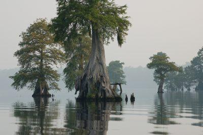 Great Dismal Swamp, Virginia