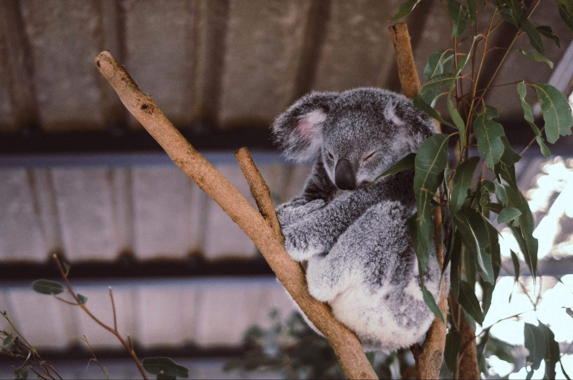 image 5 Work, Study or Volunteer - How to See the Best of Australia on a Budget