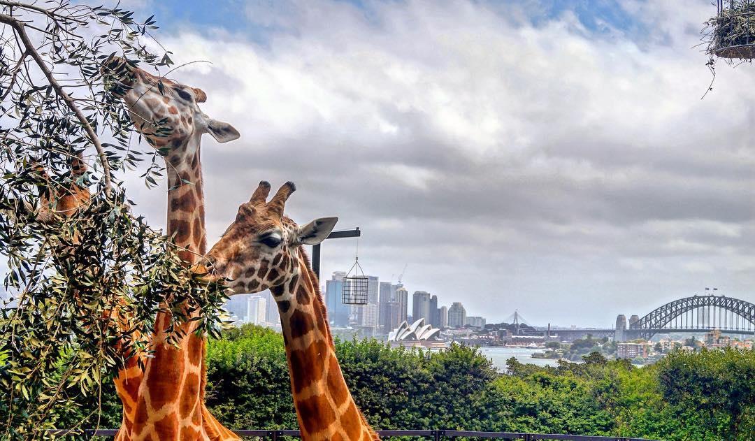 Taronga Zoo Sydney001 Cheap & Fun Family Vacation Ideas in Australia That Your Kids Will Love