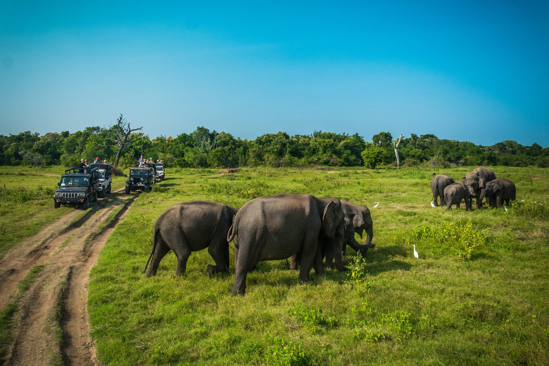 AdobeStock 134469881 Planning Your Dream Trip to Sri Lanka