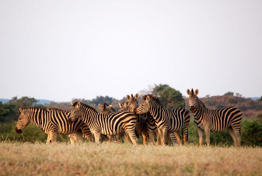 Botswana matt artz 353816 unsplash The Top 5 Countries for Safaris in Africa