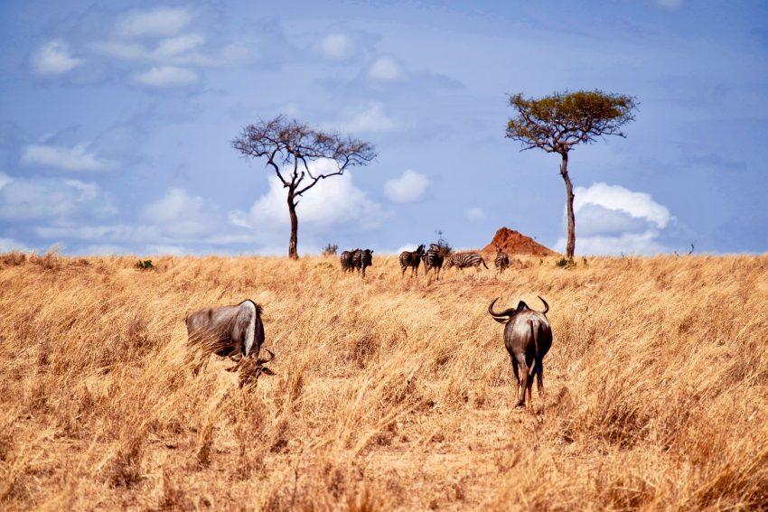 Tanzania ray rui 696410 unsplash The Top 5 Countries for Safaris in Africa