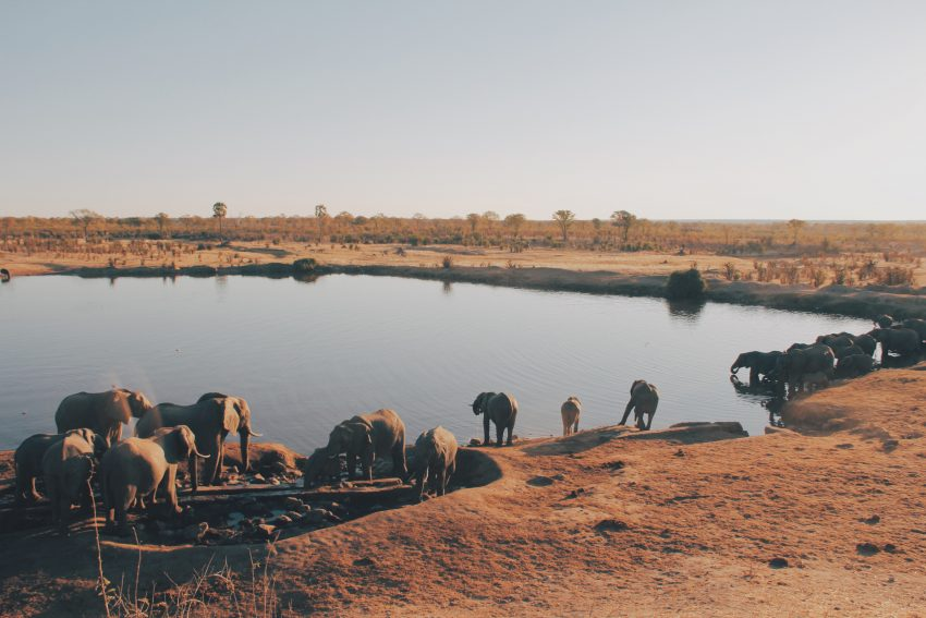 Zimbabwe christine donaldson 214622 unsplash The Top 5 Countries for Safaris in Africa