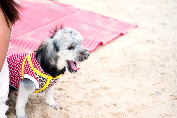 A guide to taking your dog to the beach in San Diego, California