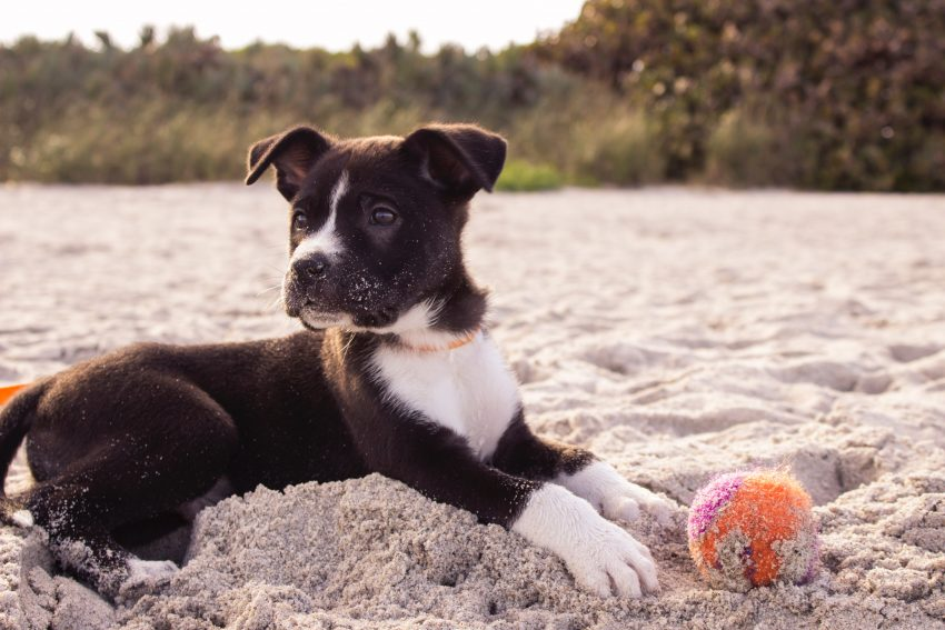 andrew pons 9713 unsplash A guide to taking your dog to the beach in San Diego, California