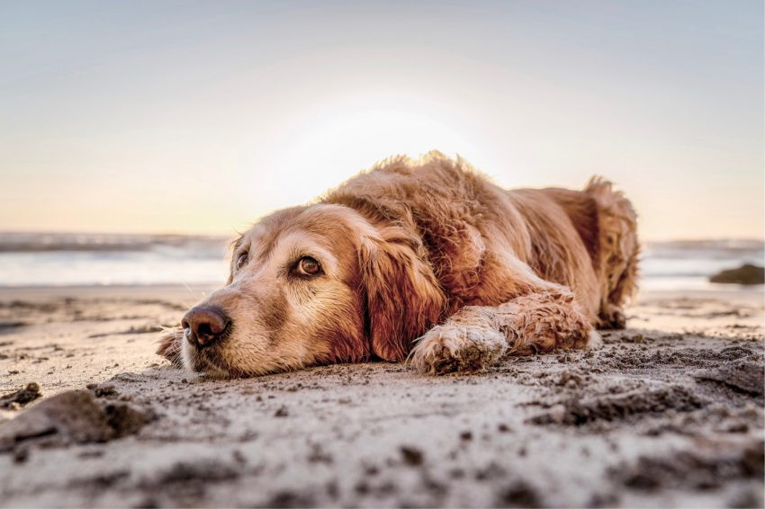 jennifer regnier 626503 unsplash A guide to taking your dog to the beach in San Diego, California