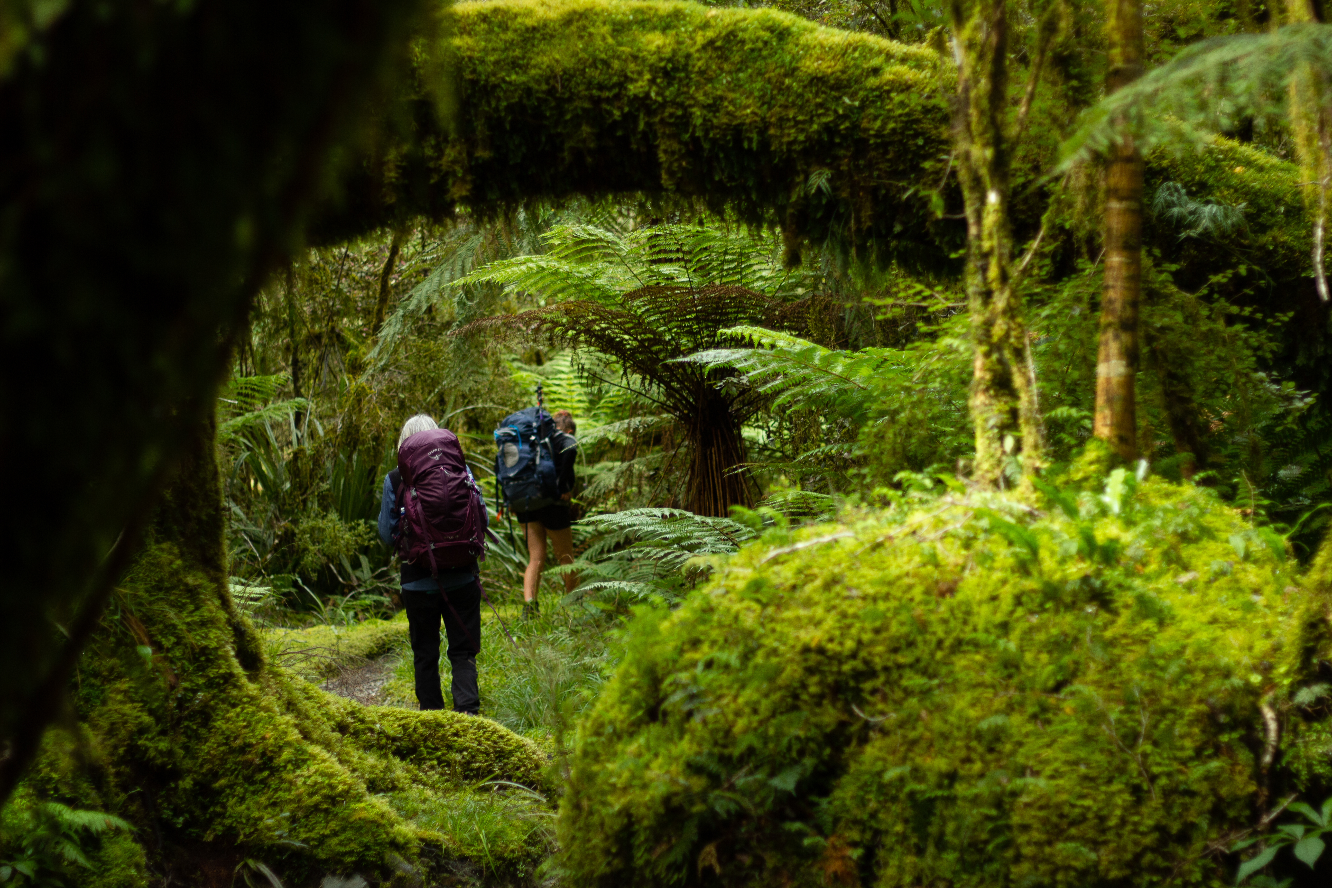 What is the Best Time for Hiking in New Zealand?