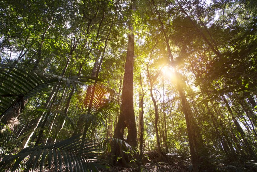 rainforrest Five reasons Cairns should be on your bucket list