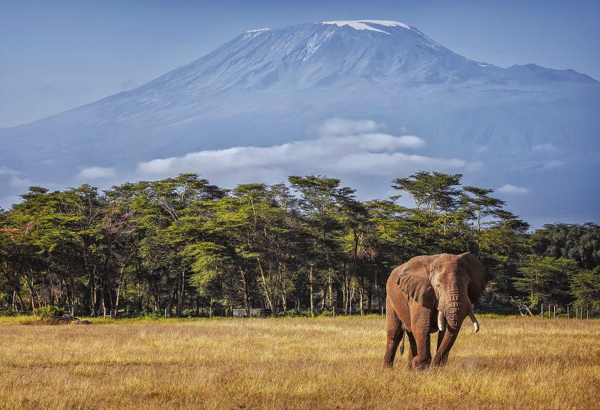 Kilimanjaro and Elephant