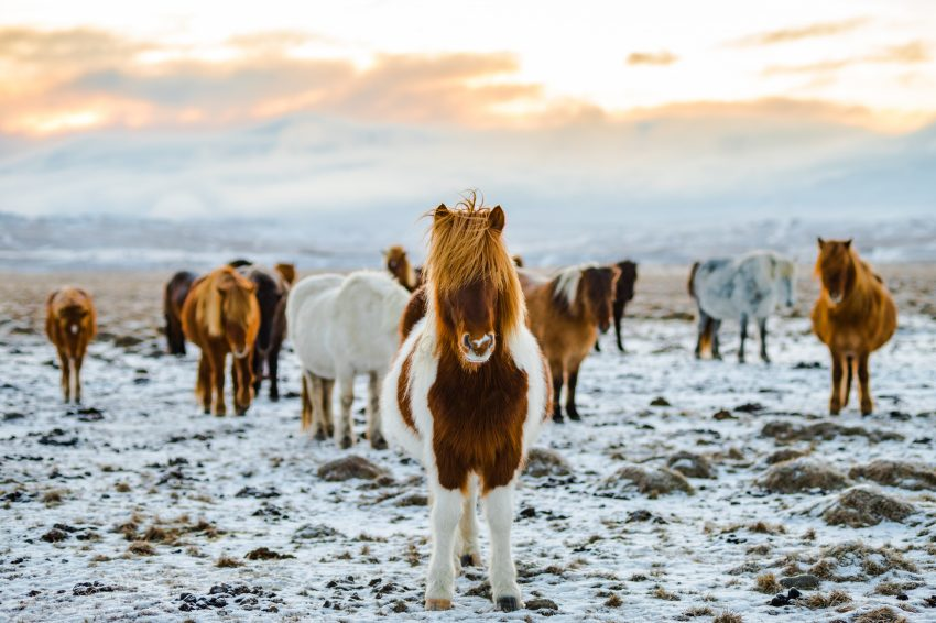 horse riding 8 Adrenaline-Pumping Activities to Do in Iceland