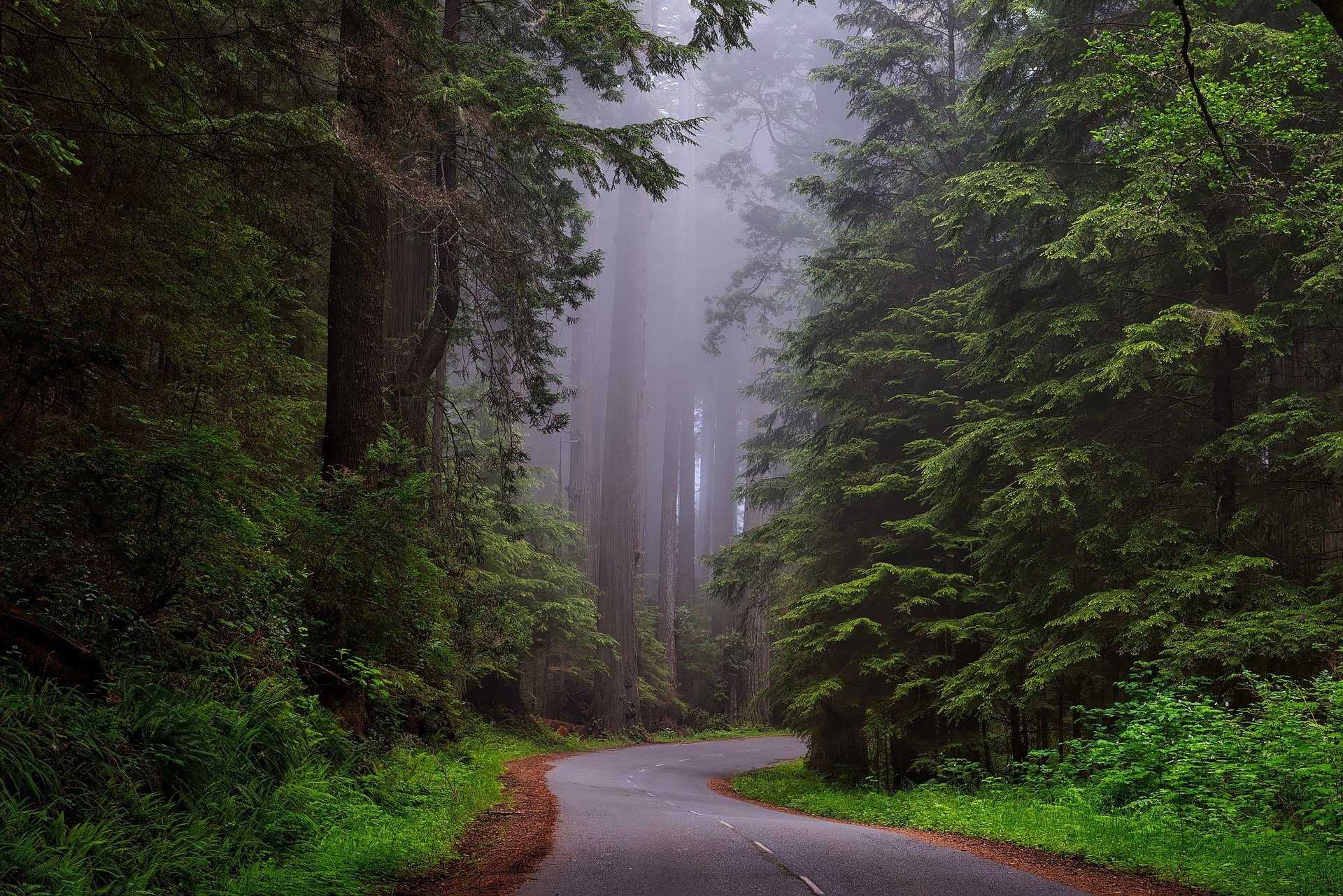 redwood national park 1587301 1920 California Coasting: 3 Epic Sunshine State Road Trips