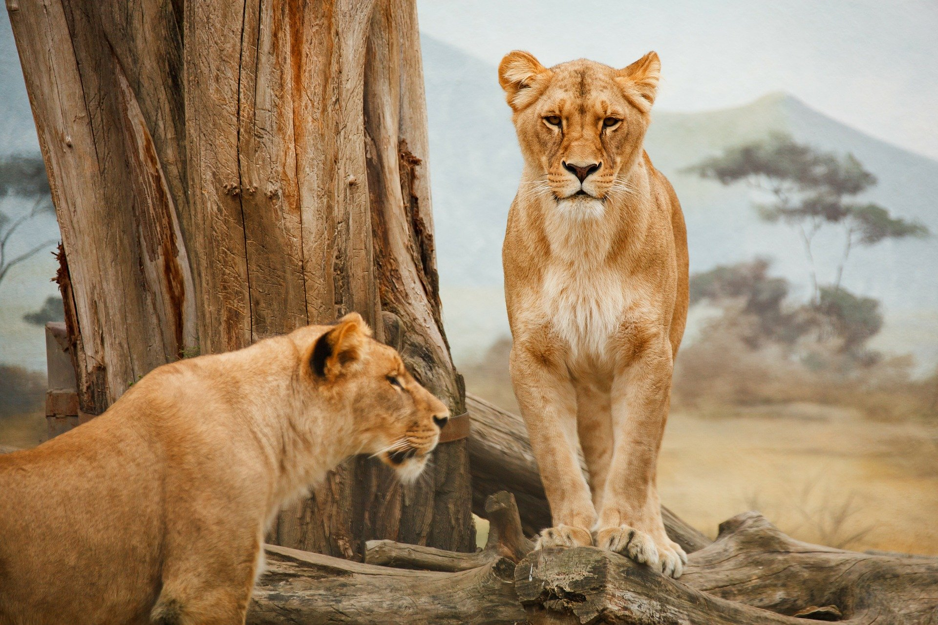 africa 21787 1920 What are the Dos and Don'ts During A Wildlife Adventure Trip?