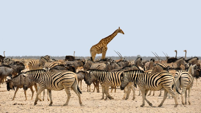 zebra 1170177 1920 What are the Dos and Don'ts During A Wildlife Adventure Trip?