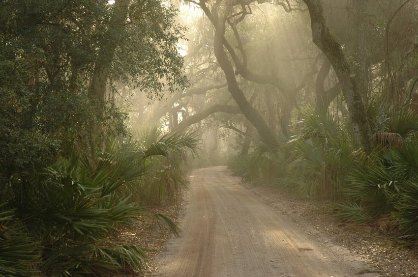 Cumberland Island Forest, by Noel Morata