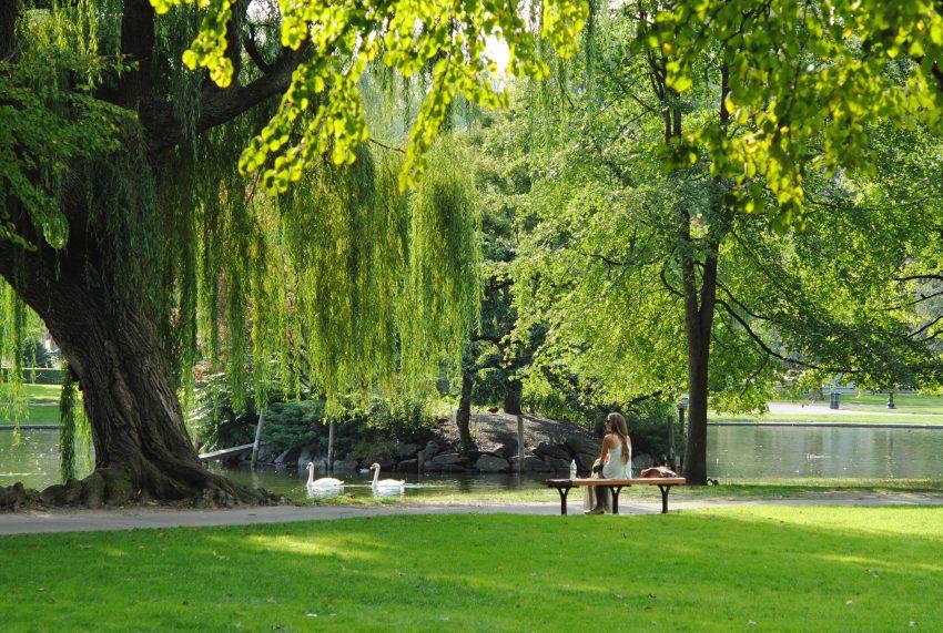 josephine baran cjrULwnJKhI unsplash 15 hidden garden, park, and nature spots in Boston