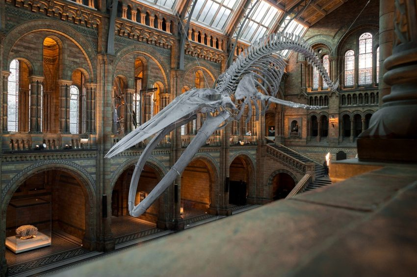 national history museum 4314035 1280 Best Places to Visit in London with Family