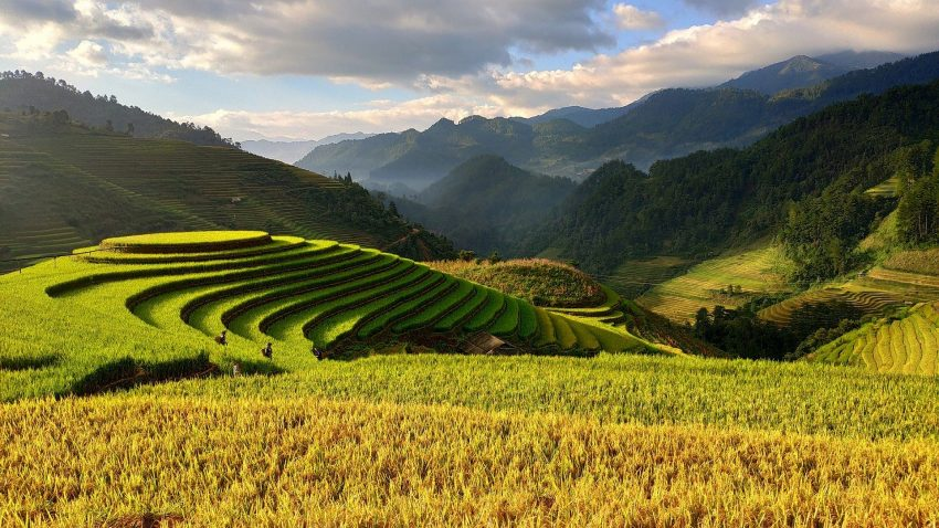 agriculture 3732476 1920 5 useful tips when visiting Vietnam