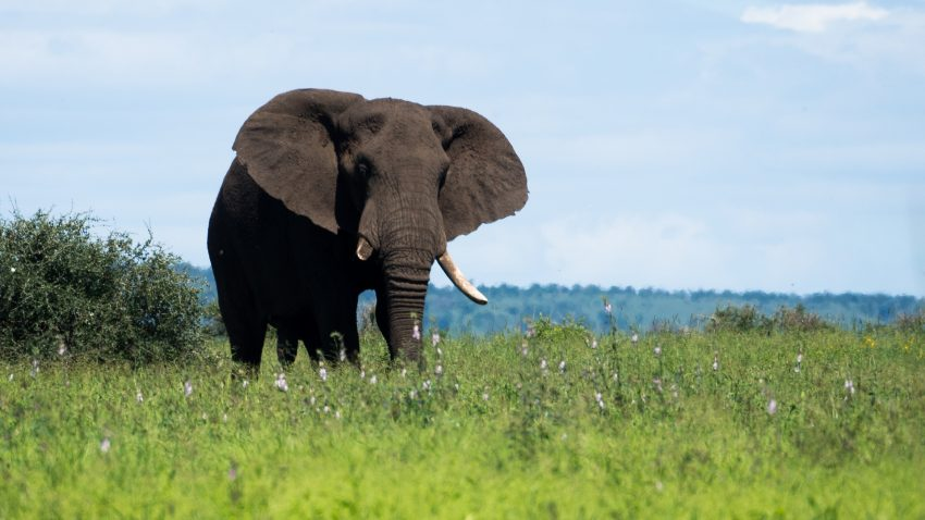elephant 2233368 1920 10 Day Itinerary: Visiting the Best of South Africa