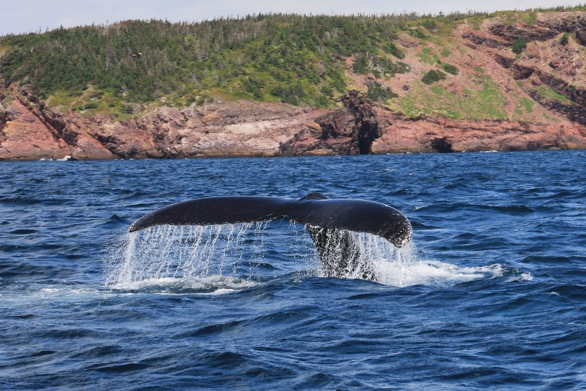 whale 2020975 1920 How Much Does It Cost to Visit some of the Best Remote Resorts