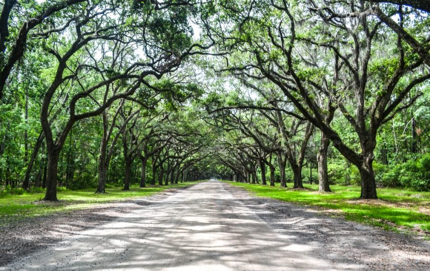 Live oak avenue wormsloe storiesbysoumya The Top 10 Romantic Things to do in Savannah, Georgia