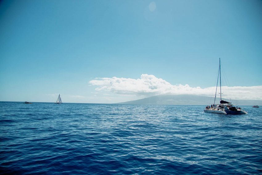 Whale Watch on Maui by Im Jess Traveling 3 8 Adventurous Things to Do in Maui
