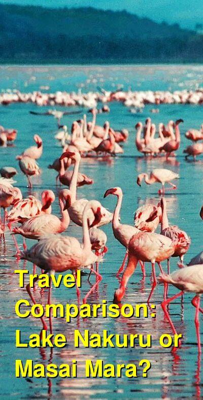 Lake Nakuru vs. Masai Mara Travel Comparison